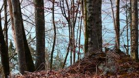 Атмосфера на Brienzersee, Швейцария падения Стоковая Фотография