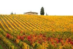 Атмосфера осени в Wineyards в Тоскане, Chianti, Италии стоковые изображения