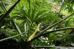 Атмосфера тропического леса стоковые фотографии rf