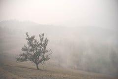 Атмосферический ландшафт острова Olkhon под туманом в лете 2015 Lake Baikal, русский Сибирь Стоковое Фото