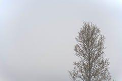 Атмосферический ландшафт острова Olkhon под туманом в лете 2015 Lake Baikal, русский Сибирь Стоковая Фотография RF