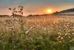 Атмосферический заход солнца над полем Стоковые Изображения