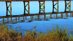датские озера острова landscape вода wadden моря природы малая приливная одичалая Стоковые Фото