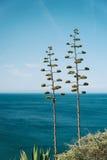 Атлантическая ель Стоковая Фотография