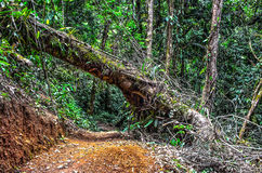 Атлантический лес стоковая фотография