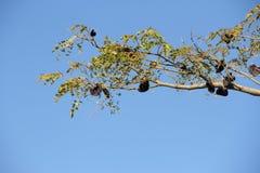 Аутохтонное дерево Стоковая Фотография