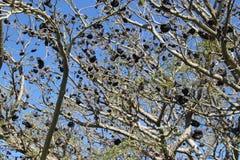 Аутохтонное дерево стоковое фото rf
