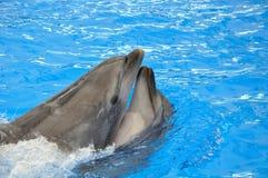 2 афалина в открытом море Стоковая Фотография RF