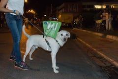 Афины, Греция, 3-ье июля 2015 Смешная собака с флагом в его назад о предстоящем референдуме в Греции Стоковая Фотография