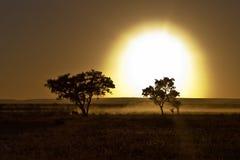 африканец sunrize Стоковое фото RF