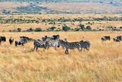 африканская живая природа Стоковое фото RF