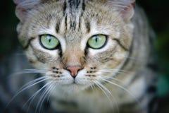 Африканская дикая кошка Стоковое фото RF