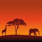 Африканская предпосылка вектора силуэта сафари Стоковые Фото