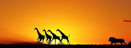 африканская природа принципиальной схемы Стоковая Фотография RF