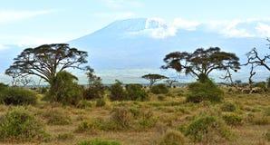Африканская саванна в Кении Стоковые Фото