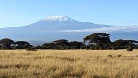 Африканская саванна в Кении Стоковые Изображения