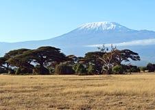 Африканская саванна в Кении Стоковое Изображение RF