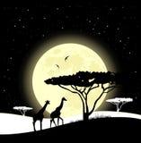 африканская саванна Жирафы идя в свет луны африканское сафари бесплатная иллюстрация