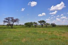 Африканская саванна куста, Намибия стоковое изображение rf
