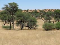 африканская саванна Стоковые Изображения