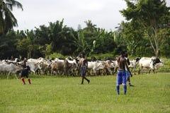 Африканская футбольная команда во время тренировки Стоковое фото RF