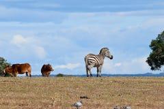 Африканские животные в парке Стоковые Фото