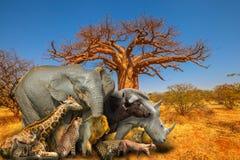 Африканские животные и предпосылка баобаба стоковое фото rf