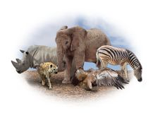 Африканские животные Стоковые Фото