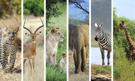африканские животные Стоковая Фотография