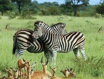 африканские животные Стоковые Изображения