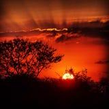 Африканские заходы солнца Стоковая Фотография RF