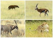 Африканские млекопитающие саванны стоковые изображения