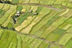 африканские поля Стоковые Фотографии RF