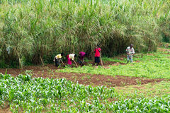 Африканские работники стоковые изображения