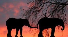африканские слоны Стоковое Изображение