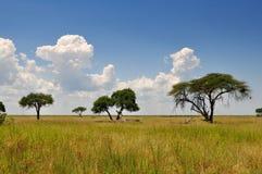 Африканский ландшафт Стоковое Изображение