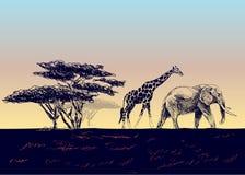 африканский ландшафт Стоковая Фотография RF