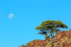 африканский ландшафт Стоковые Фотографии RF