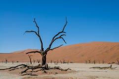 Африканский ландшафт - Sossusvlei Намибия Стоковая Фотография RF