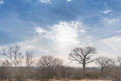 Африканский баобаб с драматическим небом anisette Стоковое фото RF
