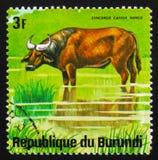 Африканский буйвол леса (nanus), животные b caffer Syncerus серии Стоковые Фотографии RF