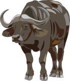 африканский буйвол иллюстрация штока
