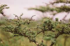 Африканский Буш Стоковые Фотографии RF