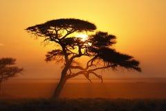 Африканский восход солнца - Намибия Стоковое фото RF