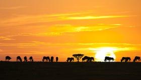 африканский восход солнца Стоковое Изображение