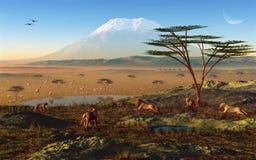 Африканский восход солнца Стоковые Фотографии RF