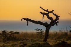 Африканский восход солнца Стоковые Изображения