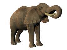 африканский выпивая слон Стоковые Фото