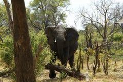 Африканский высокий свет Стоковые Фото
