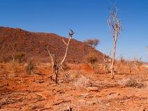 африканский засушливый ландшафт Стоковые Фотографии RF